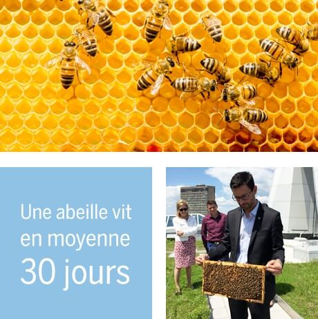 photo, abeilles, La Capitale,